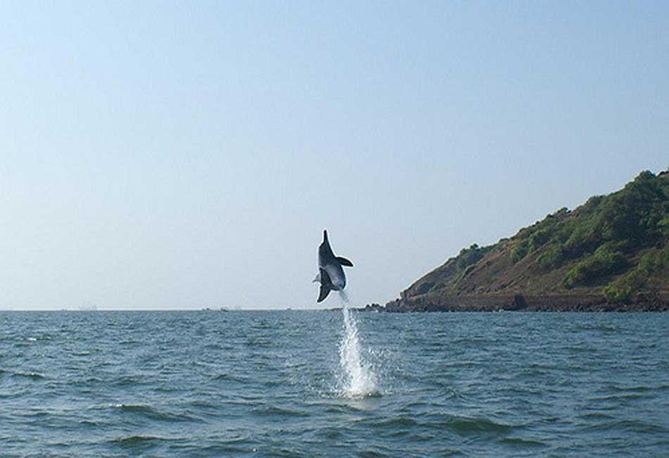 dolphin-trip-boat-goa