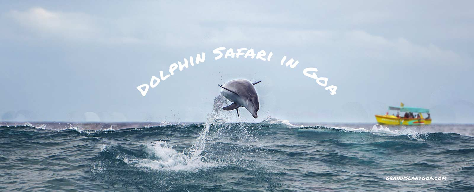 dolphin-safari-goa