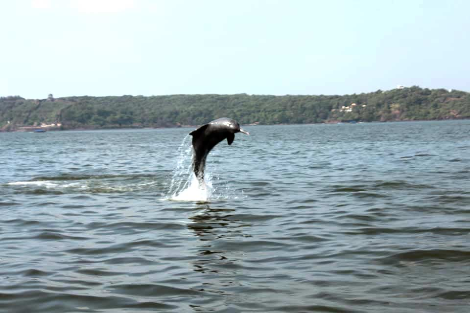 dolphin-show-goa